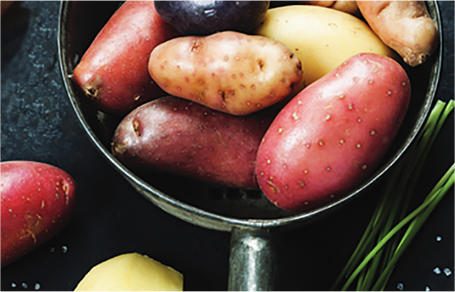 Several varieties of potatoes in saucepan